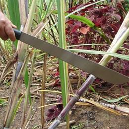 Faca Machete Matão com Lâmina de Aço Carbono - Nautika